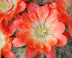 Image: Paolo Neo http://www.public-domain-photos.com/flowers/cactus-100-free-stock-photo-1.htm