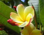 Image: Jon Sullivan http://www.public-domain-photos.com/flowers/flower-44-free-stock-photo-4.htm